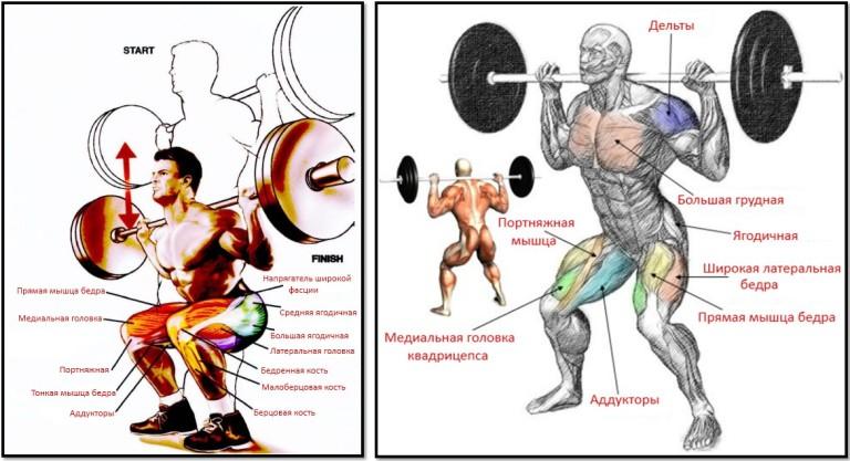 Основные задействованные мышцы