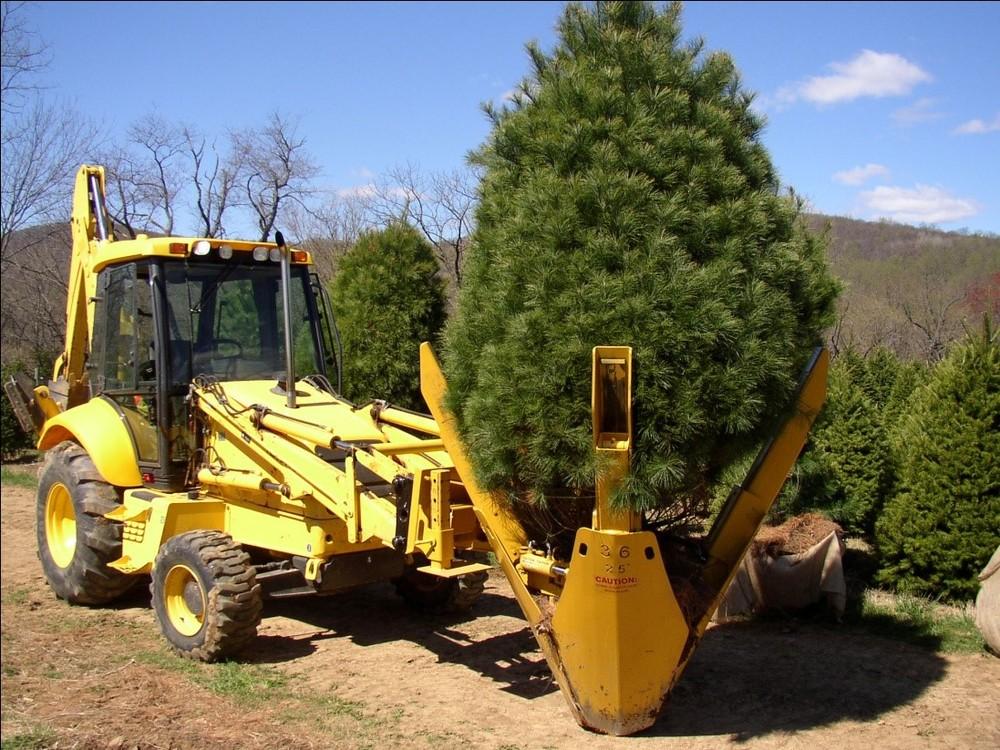 пересаживает деревья